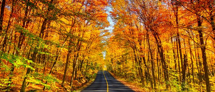 カナダの秋を楽しめる