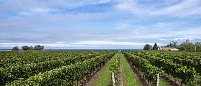カナダワインの産地「オンタリオ州」に行ってみよう