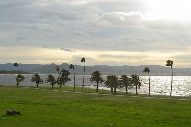 風が強く吹く海沿いの様子