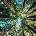 下から見上げた木々
